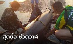 """""""วาฬหายาก"""" เกยตื้นพร้อมแผลฉกรรจ์ คาดถูกใบพัดเรือฟัน ยื้อไม่ไหว ตายคาหาด"""
