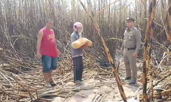 คดีไม่พลิก ผัวสารภาพฆ่าโหดเมียหมกป่าอ้อยนาน 2 เดือน ชาวบ้านรุมสาปแช่ง