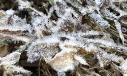 ภาคเหนือยังไม่หยุดหนาว! เหมยขาบแรกของปี 63 โผล่ดอยอินทนนท์