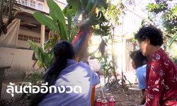 ต้นกล้วยประหลาดให้หวยถูกยกหมู่บ้าน งวดนี้เลข 12 มาแรง พระ-พราหมณ์ บอกตรงกัน