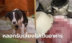 คู่รักอำมหิต รับสุนัขมาเลี้ยง ก่อนทุบจนนอนแดดิ้น แล้วชำแหละกินเนื้อ