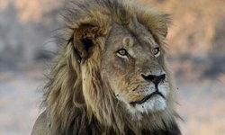 วัยรุ่นปากีสถานวัย 18 ปี หายตัวปริศนา 2 วัน ก่อนพบซากอยู่ในตัวสิงโตที่อุทยานสัตว์ป่า