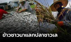 ทอ.นำร่องทัพฟ้า ช่วยไทยต้านโควิด-19 ขนข้าวจากอีสานแลกปลาในภาคใต้