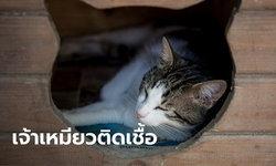 ทาสแมวเครียด! สหรัฐฯ ยืนยันพบแมวบ้าน 2 ตัวในนิวยอร์กติดโควิด-19