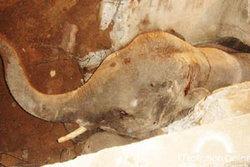 ลูกช้างเหยียบฝาท่อเสริมคอนกรีตทะลุร่วงลึก1.6ม.ทรมานติด3ชม.