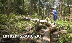 ต้นไม้ฟาดหน้า โค่นทับร่างยายวัย 78 ดับคาที่ เชื่ออาถรรพ์นกแสกร้อง ต้องมีคนตาย