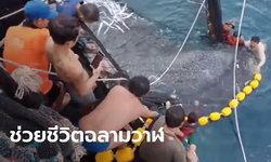 เปิดคลิปนาทีไต๋เรือ-ลูกเรือประมง ช่วยชีวิต 3 ฉลามวาฬ ติดอวนข้างเรือ (มีคลิป)