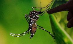 """ไขข้อเท็จจริง """"ยุง-แมลงวัน"""" แพร่เชื้อไวรัสโควิด-19 ได้หรือไม่?"""
