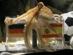 หมึกยักษ์พอลทำนายสเปนจะชนะเยอรมนี