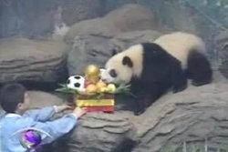 หลินปิง ได้รับรางวัลทายผลฟุตบอลโลกถูกต้อง