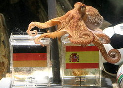 สื่อสเปนเผยหมึกพอลเตรียมย้ายบ้านไปมาดริด