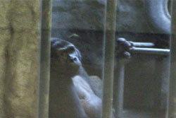 สื่ออังกฤษ ตีแผ่สภาพสวนสัตว์ พาต้า สุดเวทนา