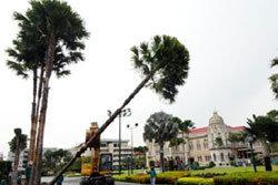 ทำเนียบ ปลูกต้นปาล์มเสริมฮวงจุ้ย