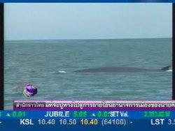 พบฝูงวาฬบรูด้าชายฝั่งทะเลแหลมผักเบี้ย
