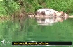 สลด! พบช้างลอยตายในเขื่อน คาดพลัดตกขณะกินน้ำ