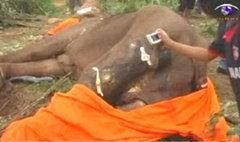 ช้างถูกยิงเชิงเขาบ้านเขาสิงโต กาญจนบุรี ตายแล้ว
