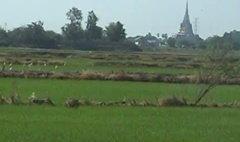 ตระกูลชินวัตร ถวายที่ดินใกล้ทุ่งมะขามหย่องแด่ในหลวง