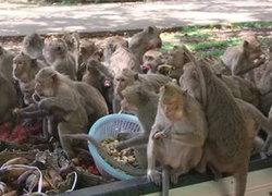 กรมอุทยานสัตว์ป่าฯทำบัตรประชากรลิง