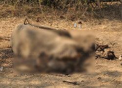 จรัมพรส่งทีมพฐ.เก็บหลักฐานฆ่าตัดหัวช้างมองควรเพิ่มโทษ