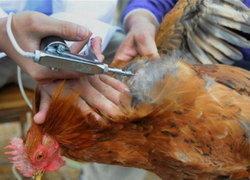 นักวิจัยจีนพบวัคซีนรักษาH7N9-ใช้งานอีก7ด.