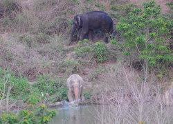 ชัยวัฒน์ ยัน ช้างเผือกยังอยู่ไทย-พม่าลงขัน6ล้านล่า
