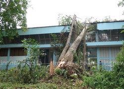 พายุพัดต้นโพธิ์-ต้นยางอายุ100ปีทับบ้าน-ร.ร.