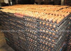 ไข่ไก่โคราชราคาพุ่งฟองละ 4 บาท