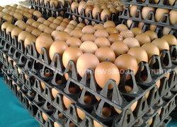 ไข่ไก่ธงฟ้าพัทลุงขายถูกแผงละ90บาท