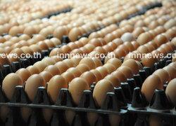 ไข่ไก่โคราชพุ่งสูงปรับราคาขึ้นแผงละ3บาท