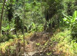 บุกโค่นสวนยางหลังถูกบุกรุกปลูกในอุทยานฯ