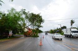 พัทลุง-ลมพัดแรงต้นไม้หักโค่นพาดสายไฟฟ้าขาด