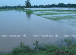 ร้อยเอ็ดน้ำท่วมสูงไหลทะลักเข้าพื้นที่เกษตร