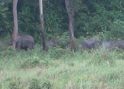 ช้างป่า40ตัวหนีแล้งบุกยึดสวนปาล์ม