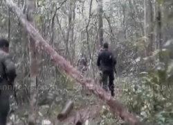 ป่าไม้สุรินทร์ปะทะแก๊งตัดไม้พะยูง-จับได้1