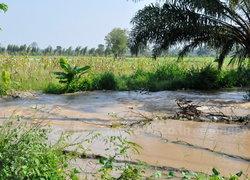 ลำน้ำ4สายโคราชท่วมพื้นที่เกษตรแล้วแสนไร่