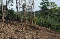 ป่าต้นน้ำเขาปู่เขาย่าถูกแผ้วถางทำสวนยางพารา