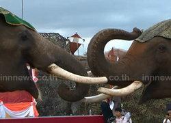 สุรินทร์-แถลงข่าว เปิดงานช้าง ยิ่งใหญ่