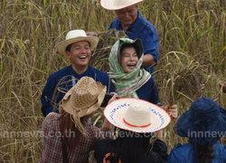 ผู้ว่าฯอุดรเกี่ยวข้าวลงแขกสานวัฒนธรรมเกษตร