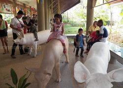 พิพิธภัณฑ์เกษตรฯ จัดงานเด็กไทยรักในหลวง