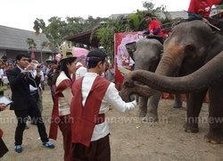 คู่สมรสไทย-เทศจดทะเบียนบนหลังช้างสุรินทร์