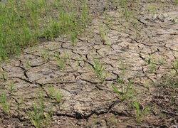 ชัยภูมิวิกฤติลำน้ำชีแห้งขอดทั้งสาย