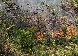 พัทลุงร้อนไฟไหม้สวนยางพาราเสียหาย30ไร่