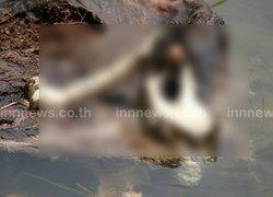 ชาวบ้านพบกวางป่าถูกฆ่าตัดหัวทิ้งซากอ่างเก็บน้ำ