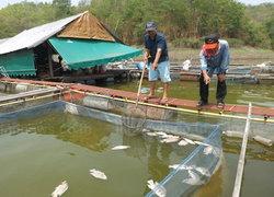 แพร่แล้งจัดปลาช็อคน้ำลอยคอตาย