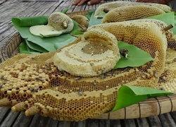 ชาวนาสุรินทร์หารังผึ้งขายเป็นรายได้เสริม