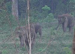 จันทบุรีขออุทยานฯช่วยนำช้างป่าออกนอกพื้นที่