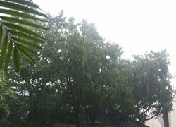 อุตุฯเผยไทยยังร้อนมีฝนฟ้าคะนองบางพื้นที่