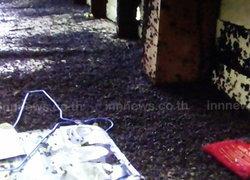 แมลงนับล้านบุกยึดบ้านที่ปราจีนบุรี-เจ้าของหนี