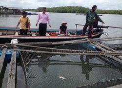 กระบี่ปลาเก๋าตายยกหมู่บ้านเสียหายกว่า2.5ล.