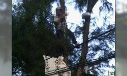 คนจีนปีนต้นไม้อนุสาวรีย์ชัยฯ ชูป้ายประท้วงแทนญาติที่ตาย